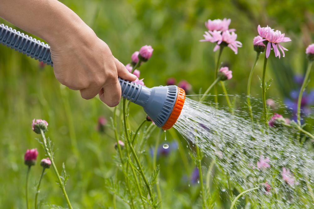 В Англии из-за засухи запрещают шланги для полива
