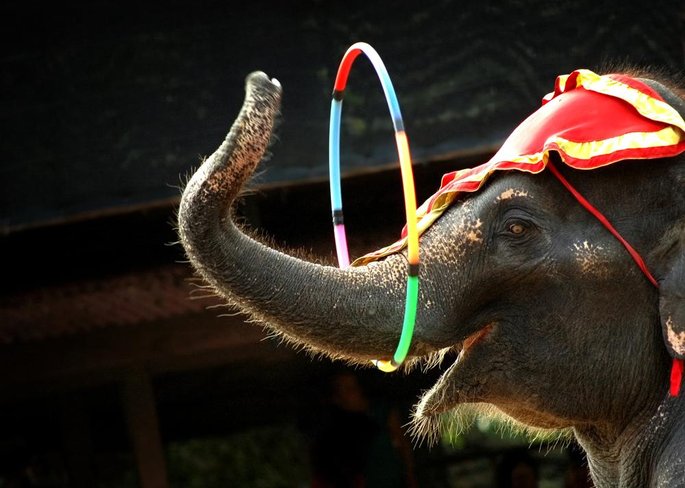 В Германии цирковой слон упал на зрителей