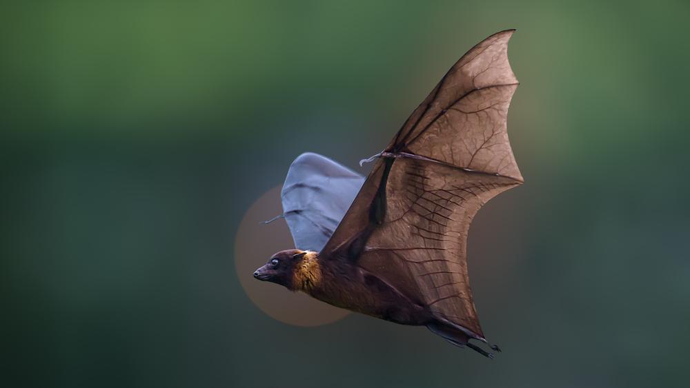 В Красном списке мира В Красном списке мира оказалось 26 000 вымирающих видов shutterstock 696611080