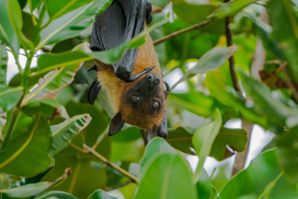 В Красном списке мира оказалось 26 000 вымирающих видов