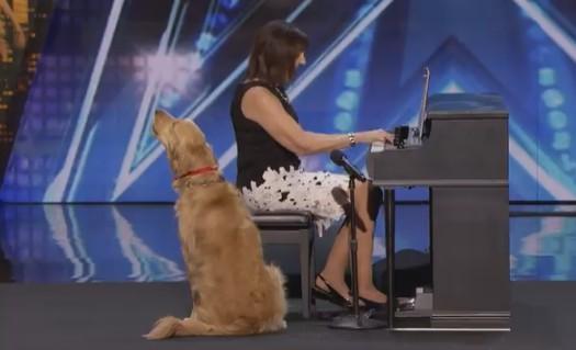 В Америке собака спела под пианино