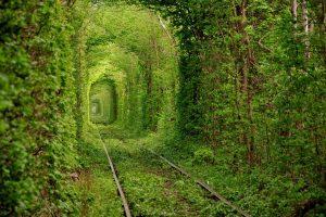 Тоннель любви в Ровенской области стал платным