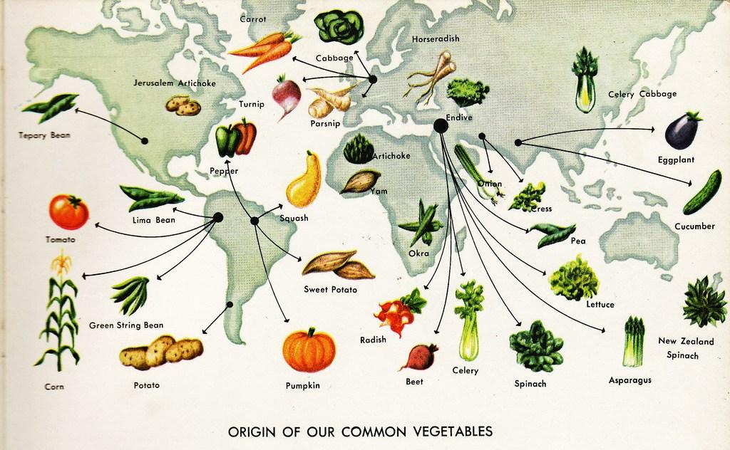 География салата: где находится родина привычных нам овощей? География салата: где находится родина привычных нам овощей? vegetables