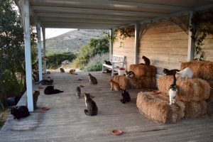 Греческий курорт ищет хранителя кошек