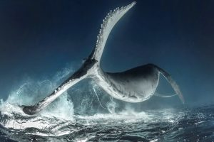 Лучшие подводные фото года