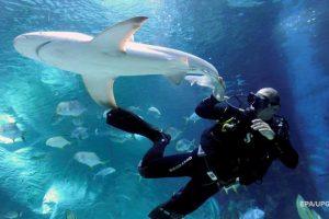 Дайвер спас акулу, вытащив пластиковую сеть из ее пасти