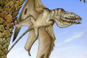 Древнейшего птерозавра, клыкастого и зобастого, обнаружили в Юте