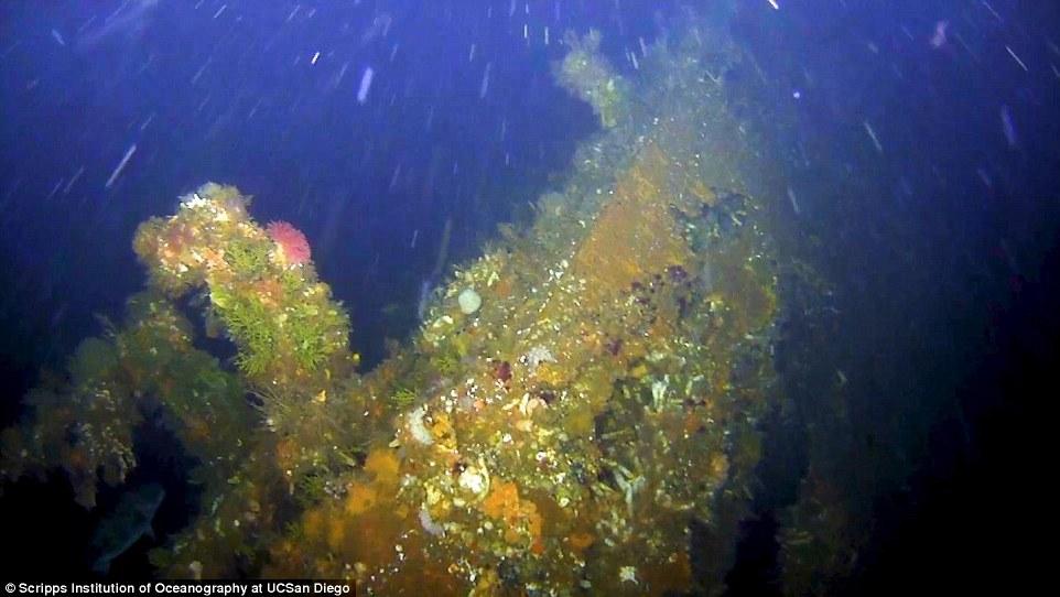 В Беринговом море нашли корму эсминца США, подорвавшегося на японской мине