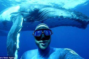 Дайвер сделал селфи с горбатым китом (видео)