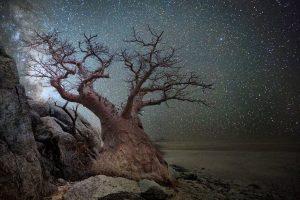 Американка снимает старейшие деревья планеты