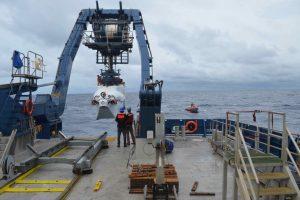 У побережья США обнаружен огромный глубоководный коралловый риф