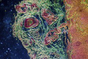 Ученые выяснили, где находится память иммунной системы