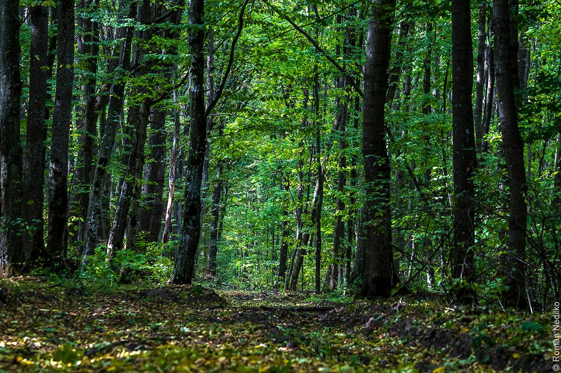 Неизведанная Украина: тайны Черного леса