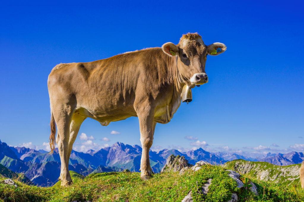 Кто согласился за $60 тысяч переехать в швейцарскую деревню
