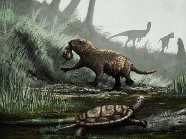 Палеонтологи нашли доисторическую крысу, которая несла яйца.Вокруг Света. Украина