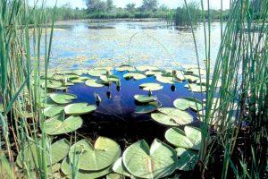Как дельта Дуная приспосабливается к глобальному потеплению