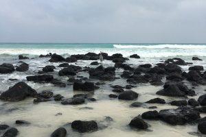 Галапагосы: там, где черепахи держат Землю