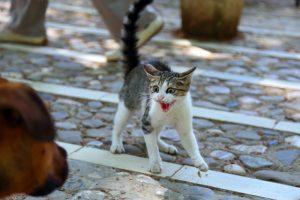 Пес спас кота от драки и стал звездой Twitter