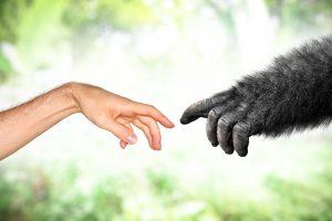 Умение говорить не повлияло на эволюцию человека