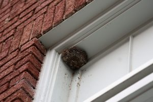 В Германии за убийство осы могут оштрафовать на 65 тыс. евро