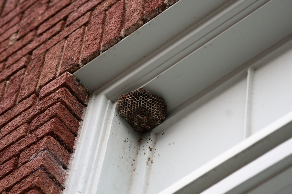 В Германии за убийство осы могут оштрафовать на 65 тыс. евро.Вокруг Света. Украина