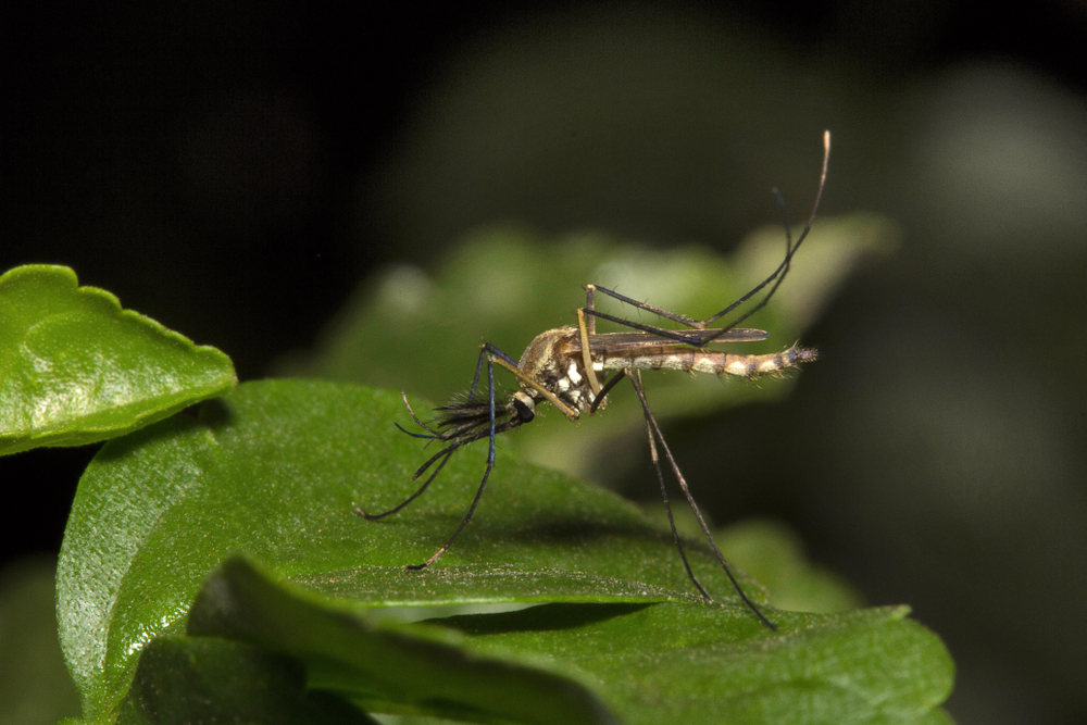 Жара в Европе: в Финляндии исчезли комары