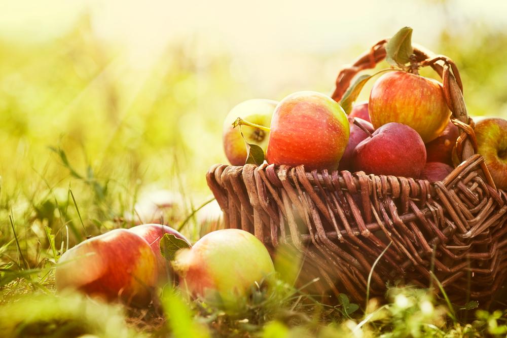 Яблочный Спас: история и традиции праздника