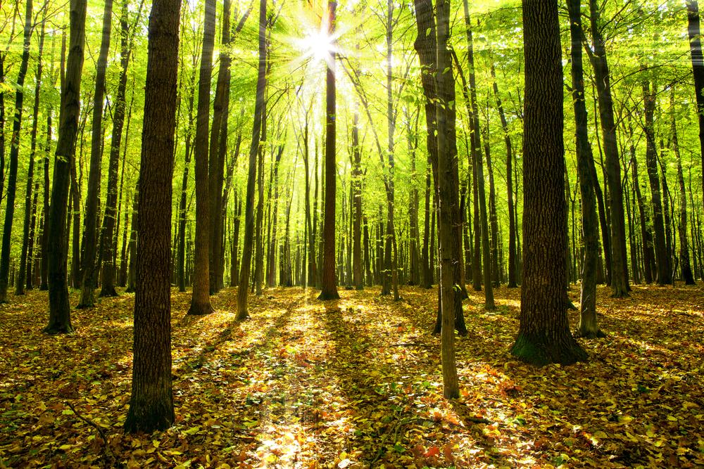 Деревья становятся выше, но ломаются чаще. Всему виной – глобальное потепление