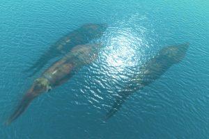 На пляже в Новой Зеландии нашли крупнейшего гигантского кальмара