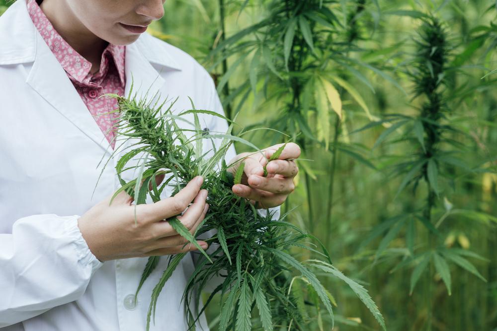 Лечение марихуана ее купить с конопли ценами семена