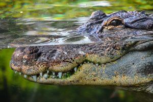 В мангровых лесах Австралии беженцев ищут среди крокодилов