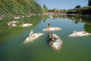 Аномальная жара привела к массовой гибели рыбы в Рейне