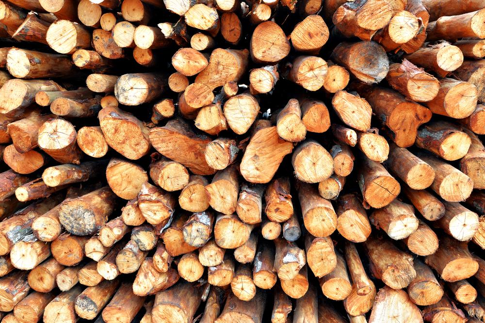 Китайцы создали дерево, которое не горит