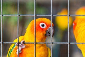 Пассажир нелегально пытался перевезти в ручной клади 80 птиц