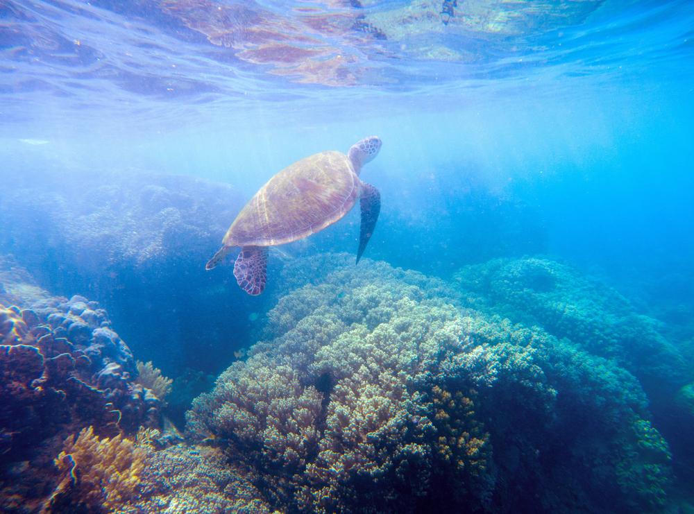 300 редких черепах погибли у побережья Мексики
