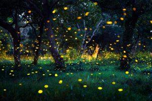Светлячки сияют, чтобы их не съели