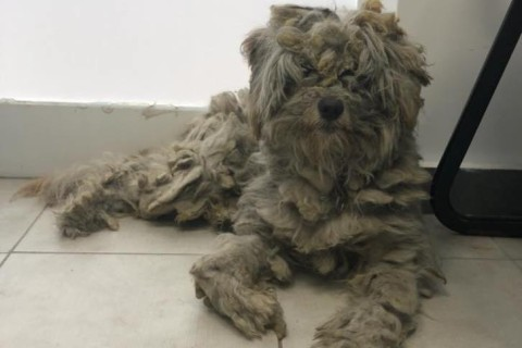 В Греции собака спряталась от пожара в камине