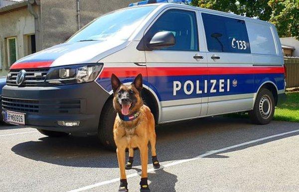 В Вене полицейских собак обули в ботинки