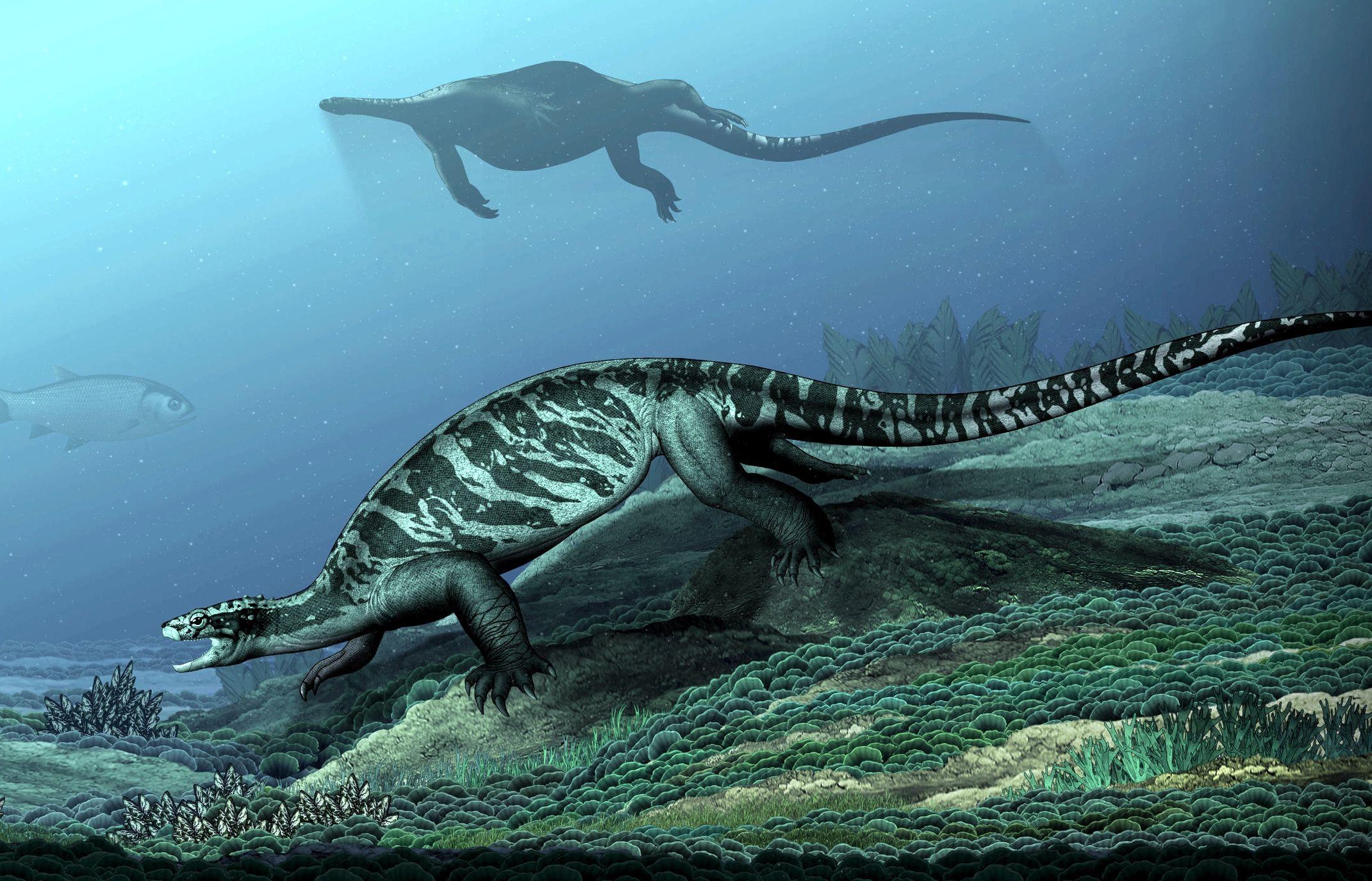 Древнейшую черепаху без панциря обнаружили в Китае