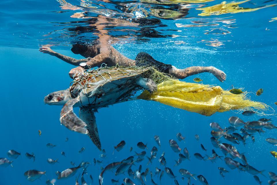 Наша хрупкая планета: победители конкурса экологического фото 2018 Наша хрупкая планета: победители конкурса экологического фото 2018 04 jing li save turtle 2