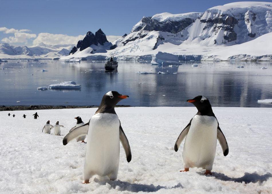 Украинок впервые приглашают в экспедицию в Антарктиду