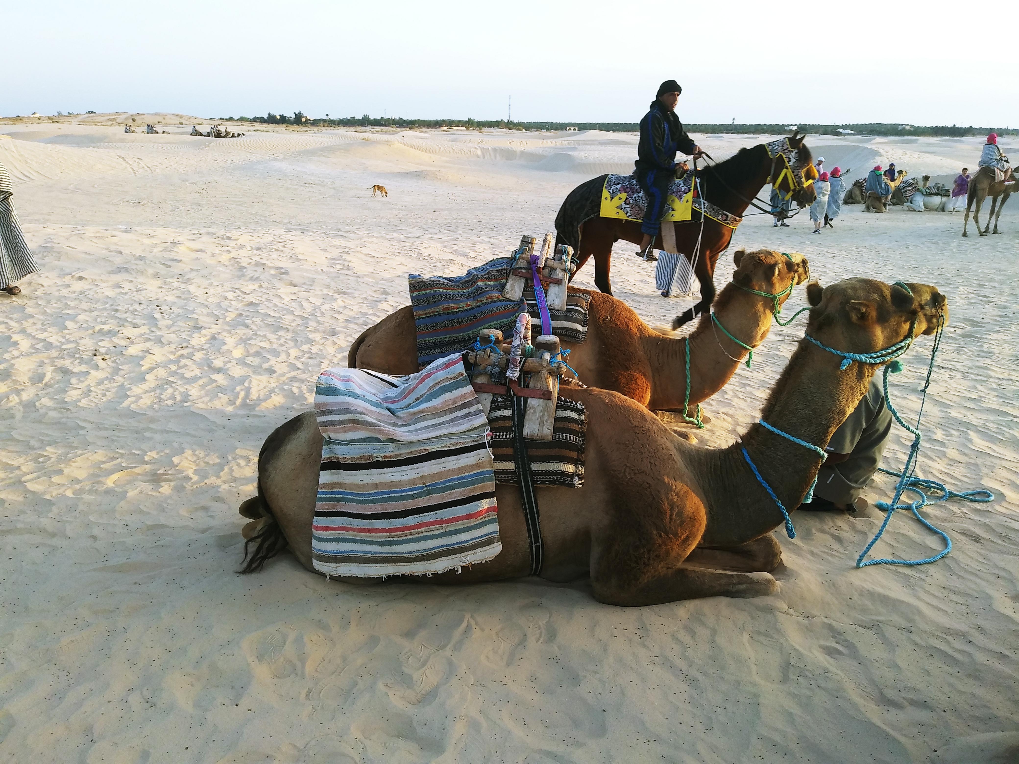 Тунис Туніс: «вільні люди» бербери, захід сонця в Сахарі та два Карфагени 20180919 063348