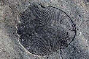 Палеонтологи нашли древнейшее животное на земле