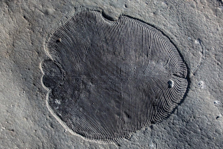 Палеонтологи нашли древнейшее животное на земле.Вокруг Света. Украина