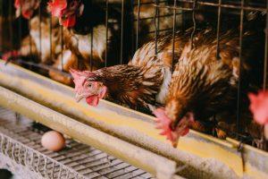 Проблему курицы и яйца рассмотрели с точки зрения физики