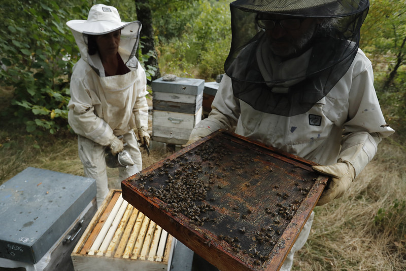 В Австрии фермера посадили за убийство пчел.Вокруг Света. Украина