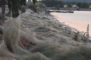 На греческом побережье нашли 300-метровую паутину