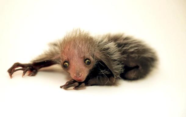 В американском зоопарке родилось очень редкое животное