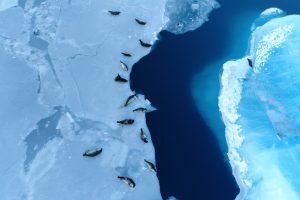 NASA вывело на орбиту «наблюдателя за льдом»
