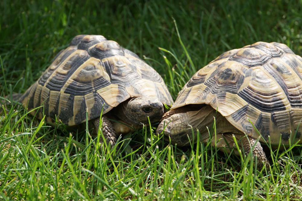 50 редких черепах украдены из заповедника Корсики